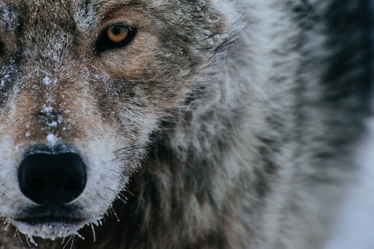 Leadership With A Wolf's Philosophy
