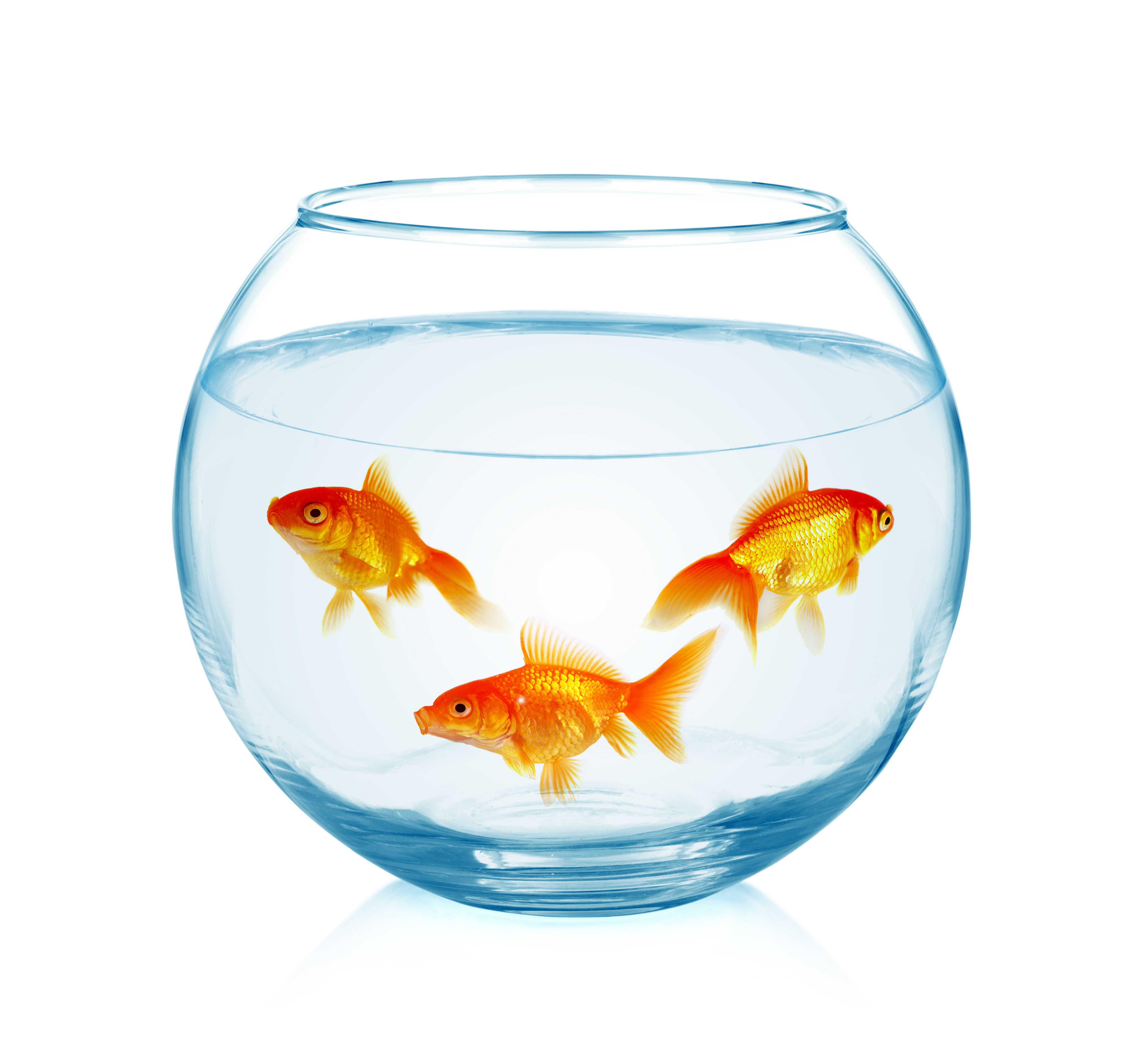 Weekly Training – Fishbowl Discount Tactic